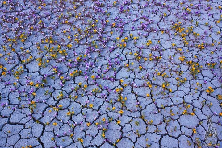Flowers bloom Utah Badlands desert
