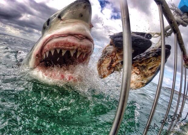 Mad-Grumpy shark by Emma Brewer
