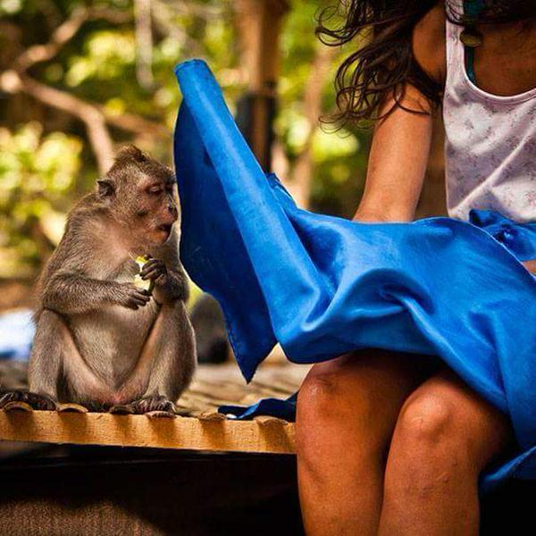nasty-monkey. Be artist Be art