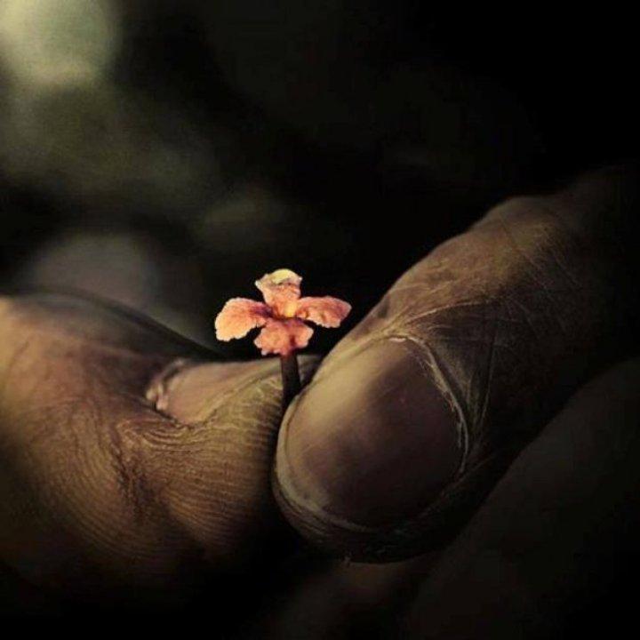 Beauty is in little things...