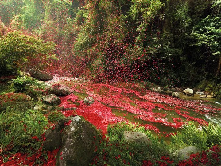 Flowerful explosion in Costa Rica - by Nick Meek