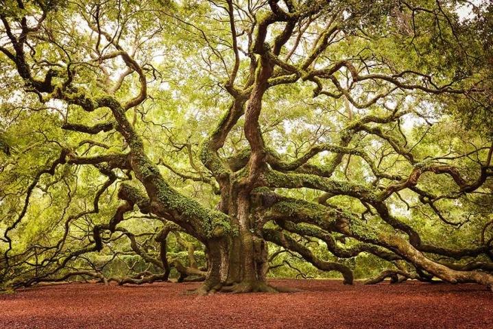 Stunning Wild trees