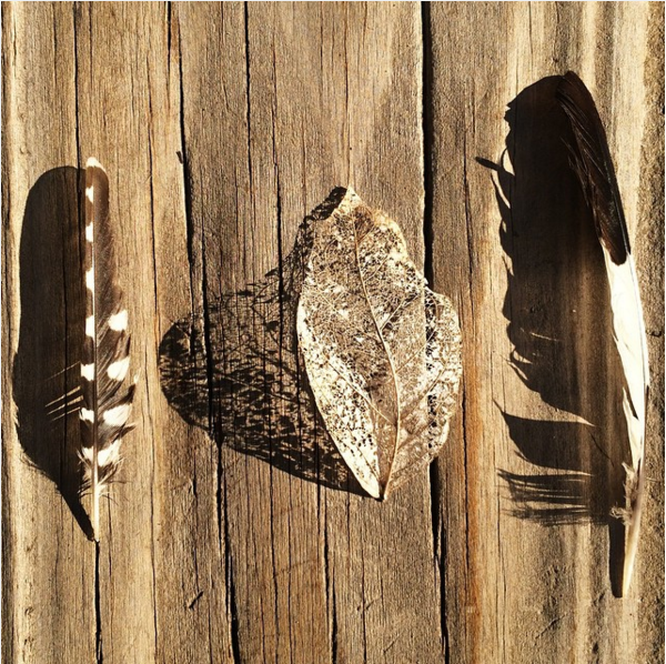 Feathers in to the wild - Be artist Be art