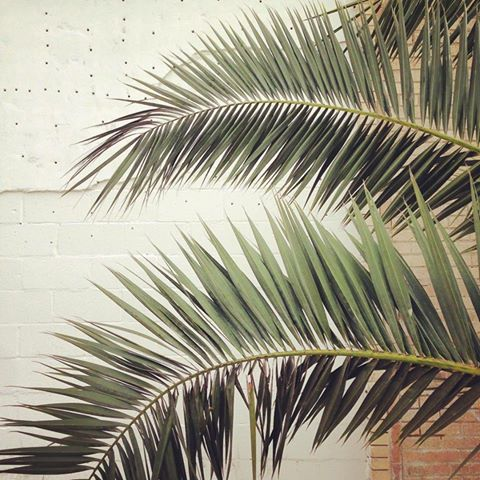 Palm Tree - Be artist Be art