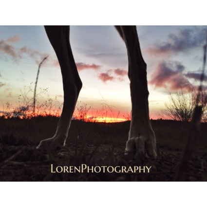 Raw sunset - by Lorenphotography - Be artist Be art