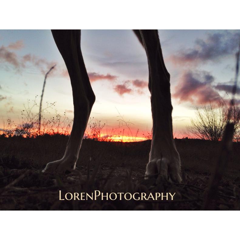 Raw sunset - by Lorenphotography - Be artist Be art