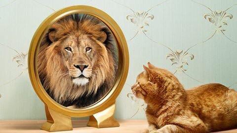 Self confidence - attitude