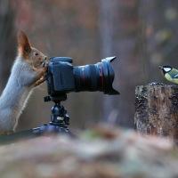 Wild shoot - Nasty Animals