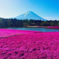 Fuji Mountain (Japan) - nicely dressed