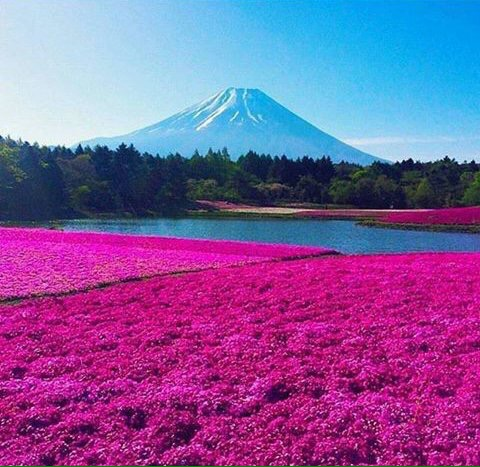 Fuji Mountain (Japan) -  - be artist be art - urban magazine
