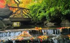 Central Park - by Caminando por Nueva York - be artist be art
