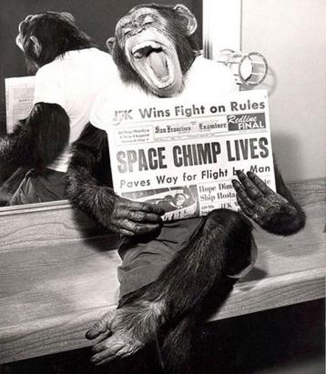 Space Chimp - Happy Life