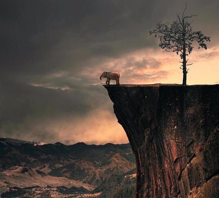 Wild life - Pure light - be artist be art