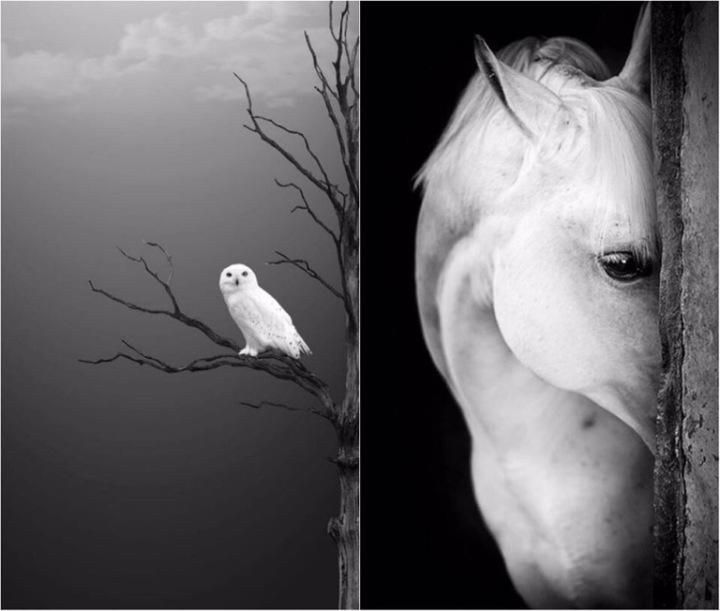 Beauty Soul - Wild Life - be artist be art