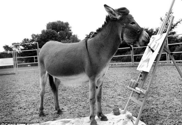 Donkey Art - Creative - be artist be art