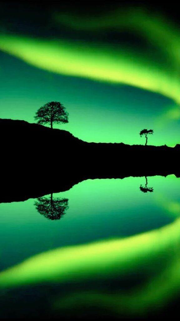 Green Sunset - Wild Life- beartist be art