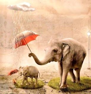 Animal Instinct - Wild life - be artist be art