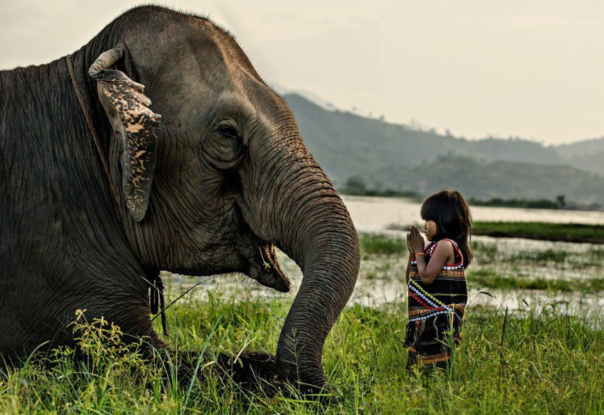Nature Respect - Wild life, Pure life - be artist be art