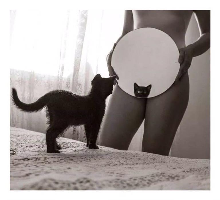 Kitty Cat - Nasty #Photography - be artist be art