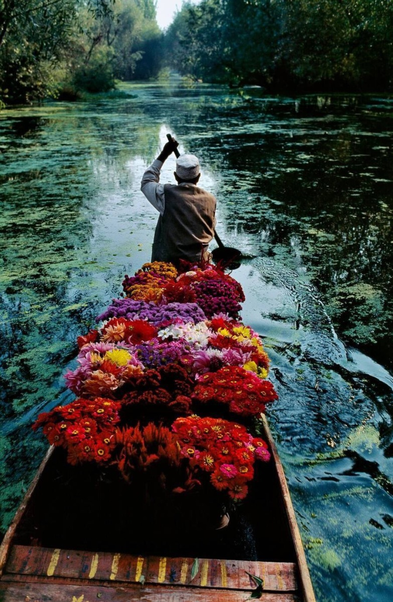 Flower life at Dal Lake - by Steve McCurry